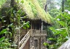 cloud forest hut